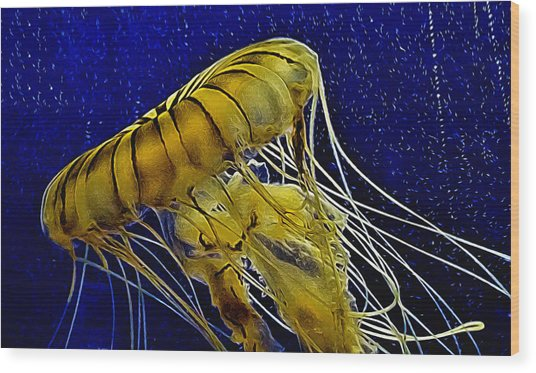 Jellyfish Aglow Wood Print
