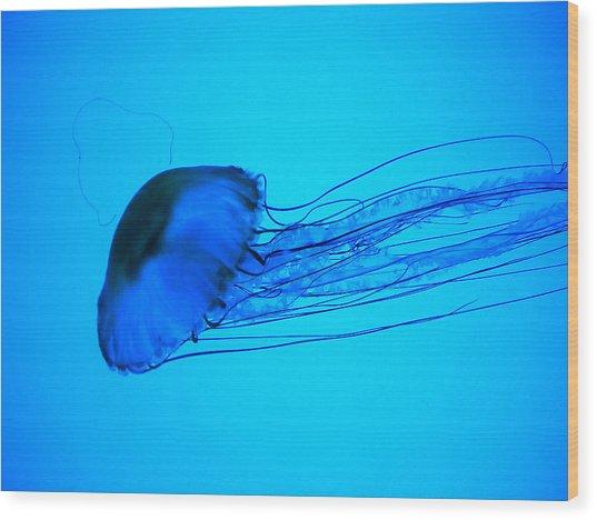 Jellyfish  Wood Print by Elizabeth Fredette