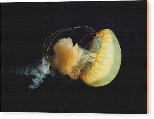 Jellyfish Wood Print