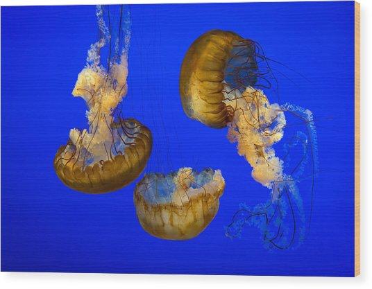 Jellyfish Sea Nettle Marine Life - Ripleys Aquarium Gatlinburg Tn Wood Print