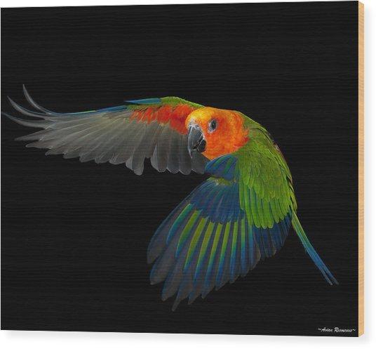 Jenday In Flight Wood Print