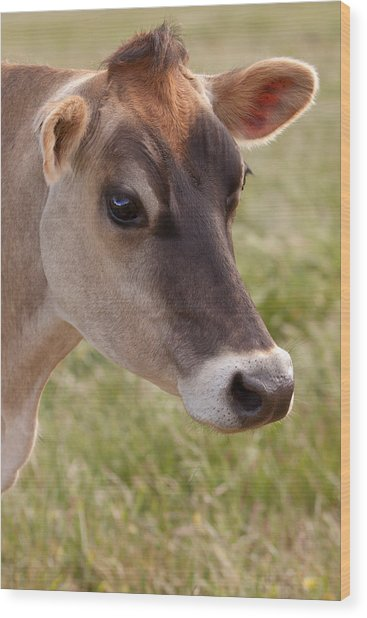 Jersey Cow Portrait Wood Print