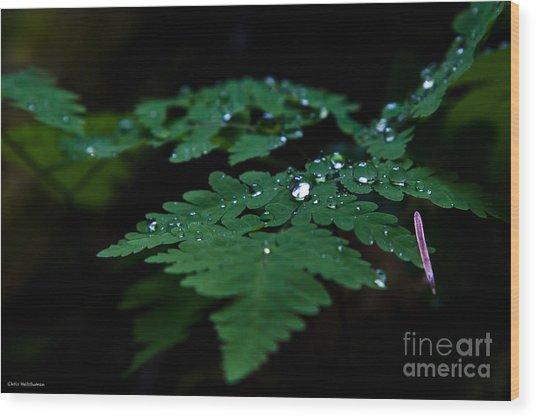 Jeweled Fern Wood Print by Chris Heitstuman