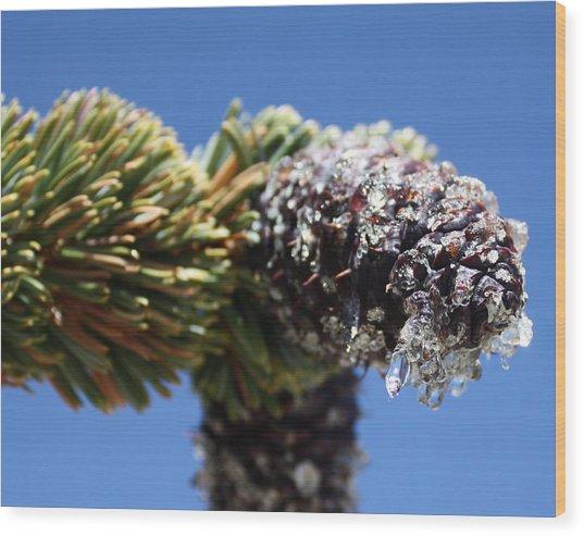 Jeweled Pinecone Wood Print