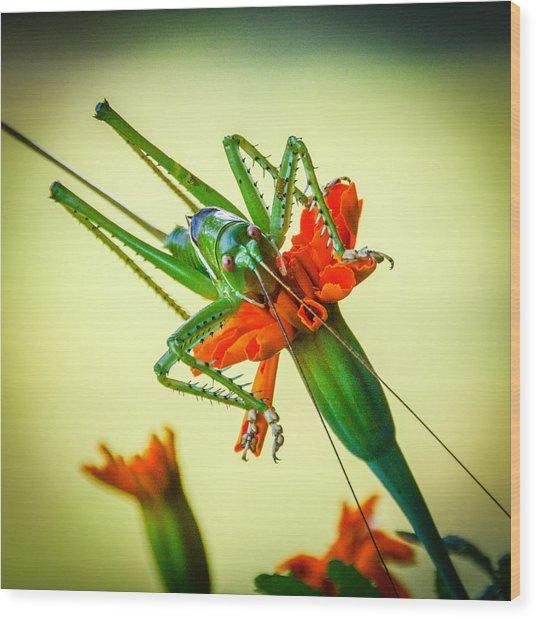 Jiminy Cricket Wood Print by Wally Taylor