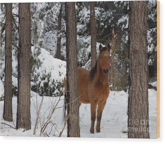 Jo Jo In The Snow Wood Print