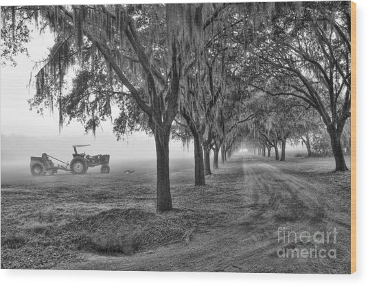 John Deer Tractor And The Avenue Of Oaks Wood Print
