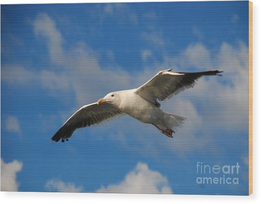 Jonathan Livingston Wood Print