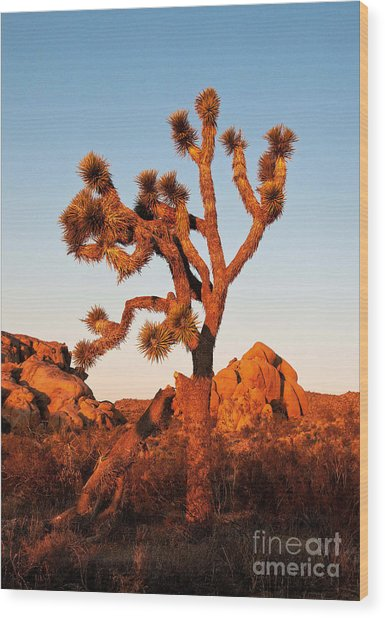 Wood Print featuring the photograph Joshua Tree At Sunset by Mae Wertz