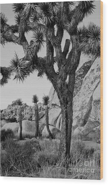 Joshua-tree Babies Wood Print by Mae Wertz