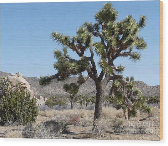 Joshua Tree National Park 6 Wood Print by Deborah Smolinske