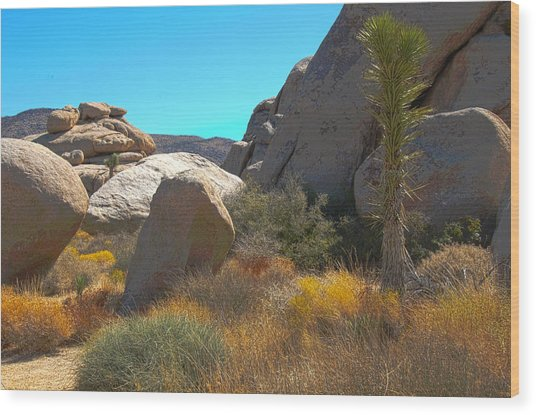 Joshua Tree National Park Wood Print