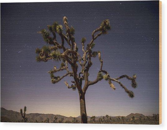 Joshua Tree Night Wood Print