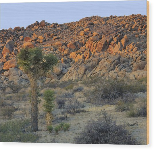 Joshua Tree With Offsrping Wood Print