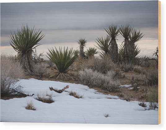 Joshua Trees And Snow Wood Print by Pamela Schreckengost