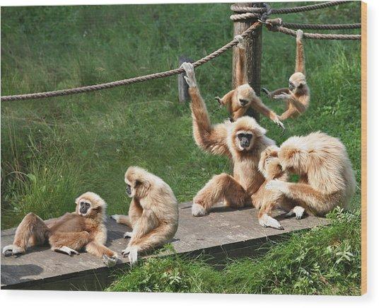 Joyful Monkey Family Wood Print
