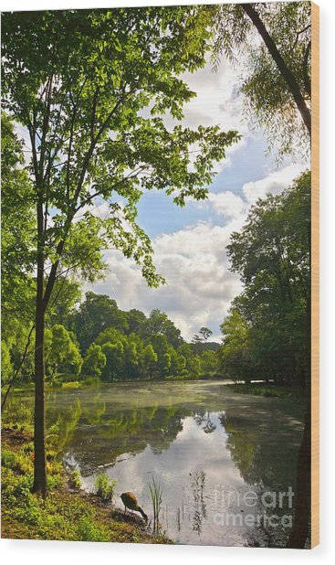 July Fourth Duck Pond With Goose Wood Print