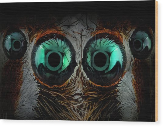 Jumping Spider Eyes Wood Print