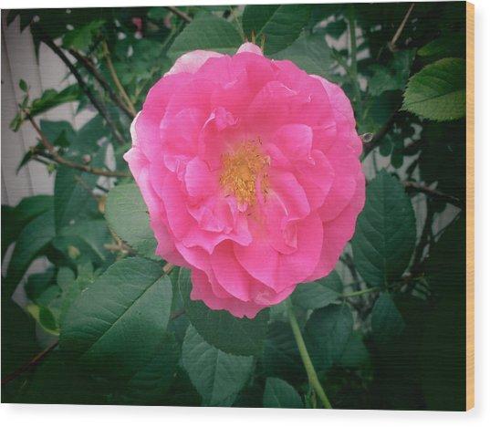 June Rose I Wood Print