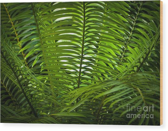 Jungle Fern Wood Print