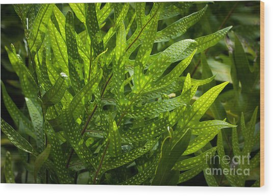 Jungle Spotted Fern Wood Print
