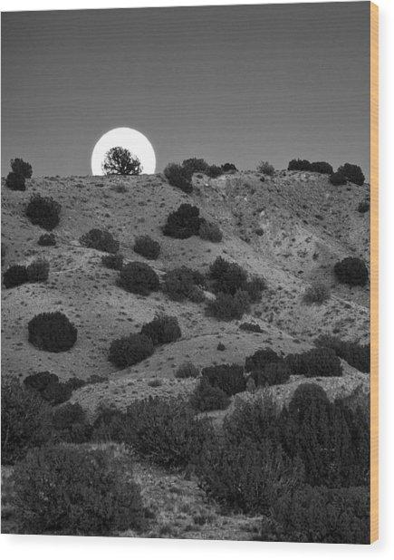 Juniper At Moonrise Wood Print