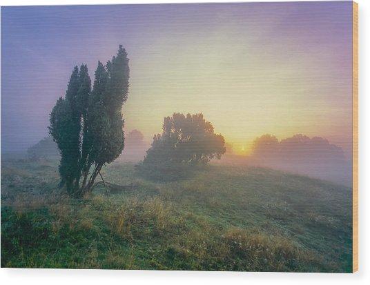 Juniper Trees In Early Morning Fog  Wood Print by Martin Liebermann