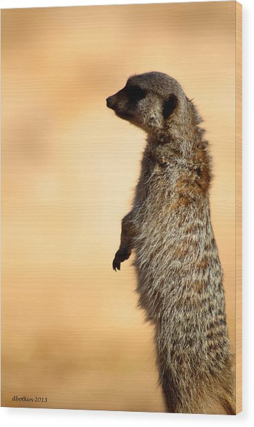 Just A Meerkat Wood Print by Dick Botkin