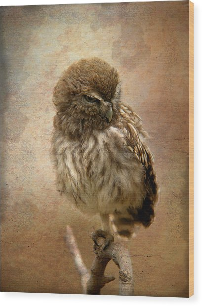 Just Awake Little Owl Wood Print