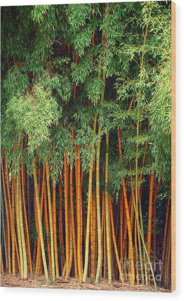 Just Bamboo Wood Print