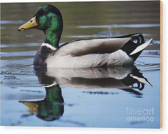 Just Ducky. Wood Print