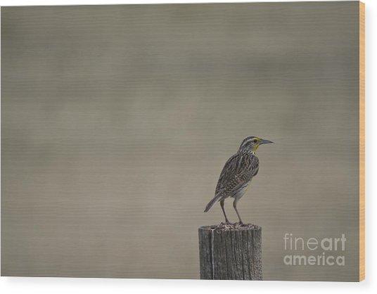 Western Meadowlark On A Fence Post Wood Print