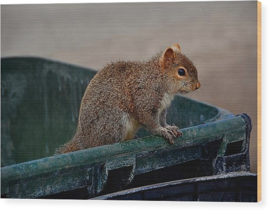 Just Looking For My Nuts Wood Print