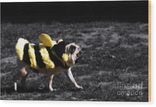 Just Pugging Along At The Speed Of Halloween  Wood Print by Steven Digman