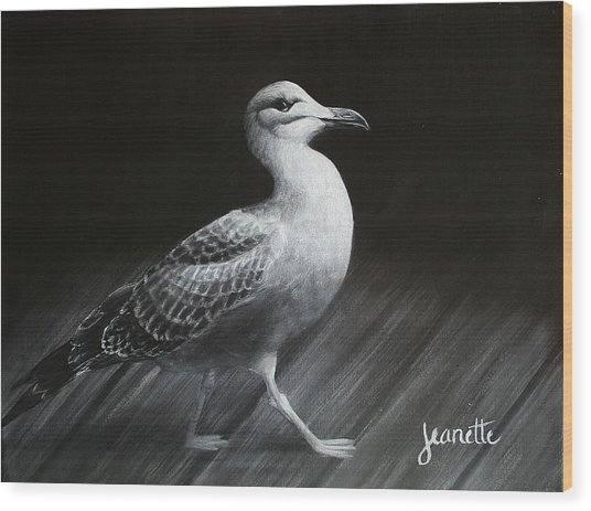 Juvenile Gull Wood Print