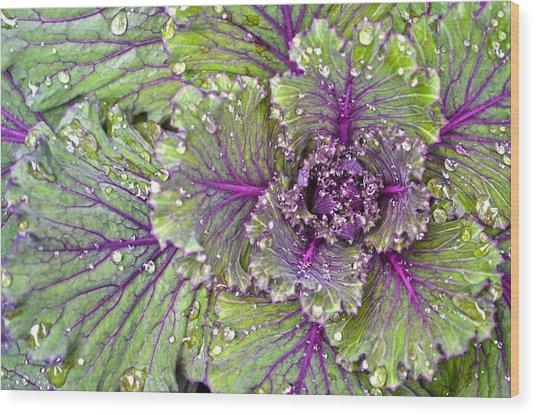 Kale Plant In The Rain Wood Print