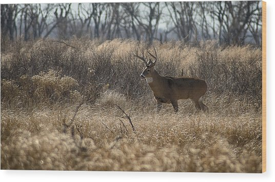 Kansas Whitetail Wood Print
