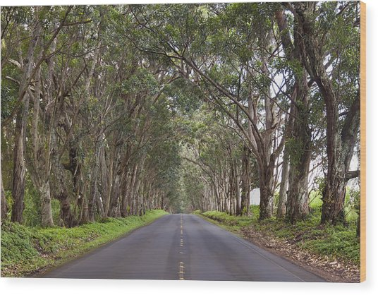 Kauai Tree Tunnel Road Wood Print