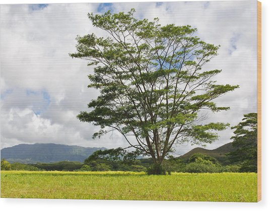 Kauai Umbrella Tree Wood Print