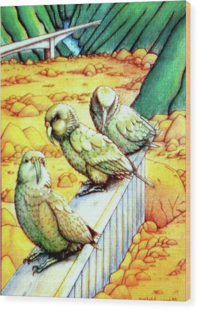 Kea Wood Print by Barbara Stirrup