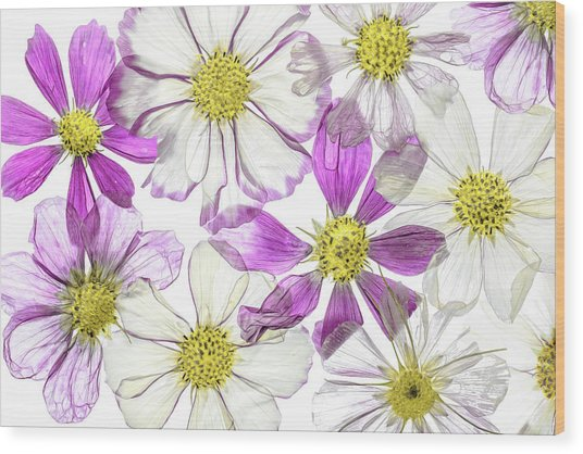 Keeping Summer Wood Print by Mandy Disher
