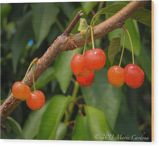Kelowna Cherries Wood Print by Marie  Cardona