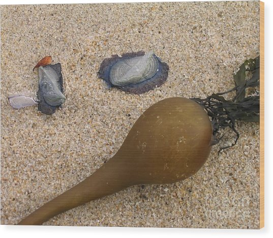 Kelp Float And Velella Wood Print
