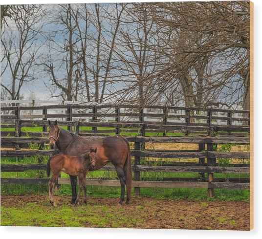 Kentucky Mare And Foal Wood Print