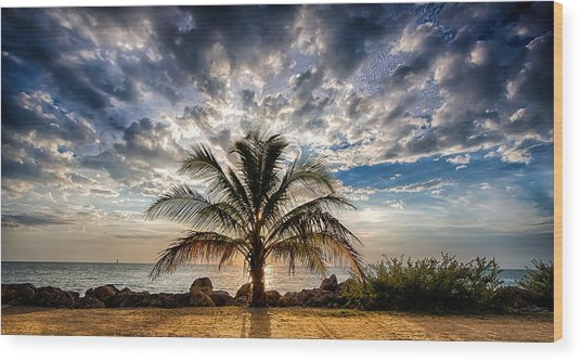 Key West Florida Lone Palm Tree  Wood Print