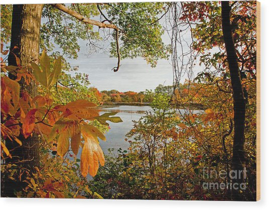 Kickimuit View Wood Print