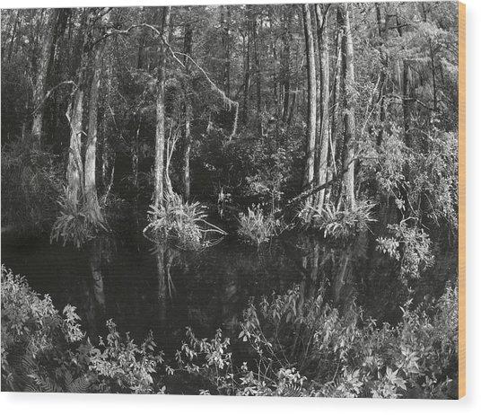 Kiev Swamp Wood Print