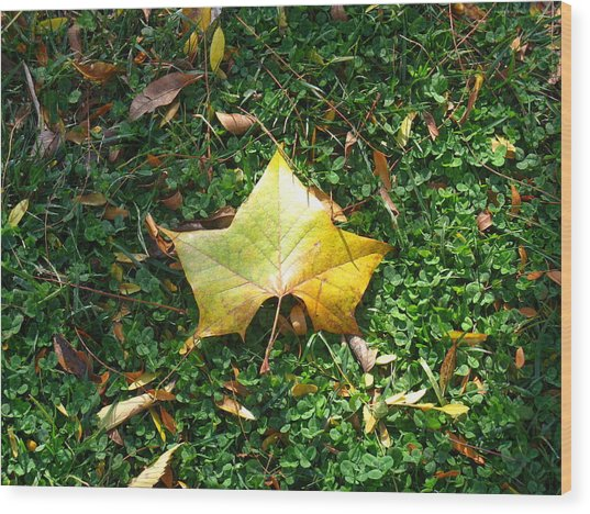 King Leaf Wood Print