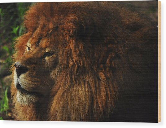 King Of The Jungle Wood Print by Valarie Davis