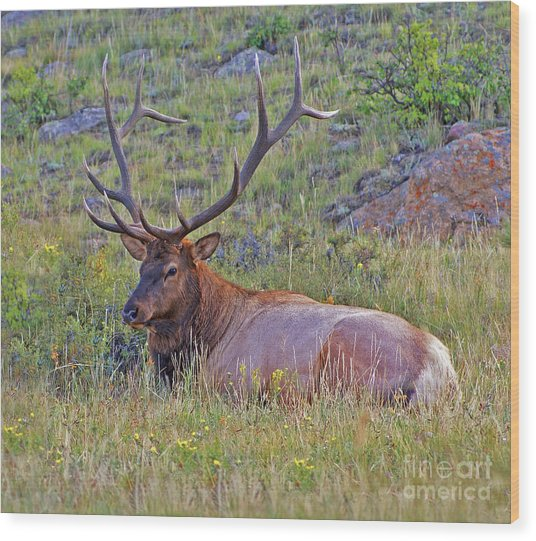 King Of The Meadow Wood Print